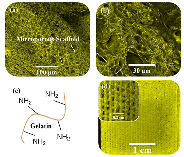 Physical evaluation of 3D-printed gelatin-hydroxyapatite-reduced graphene oxide nanocomposite as a bone tissue engineering scaffold